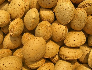 Organic Almond with Shell